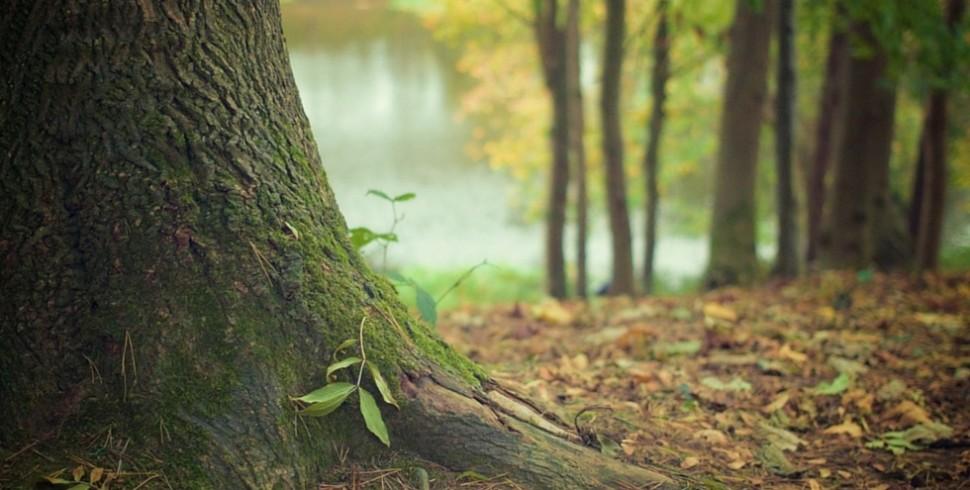 Vacanze diverse all'insegna del verde e del primitivo